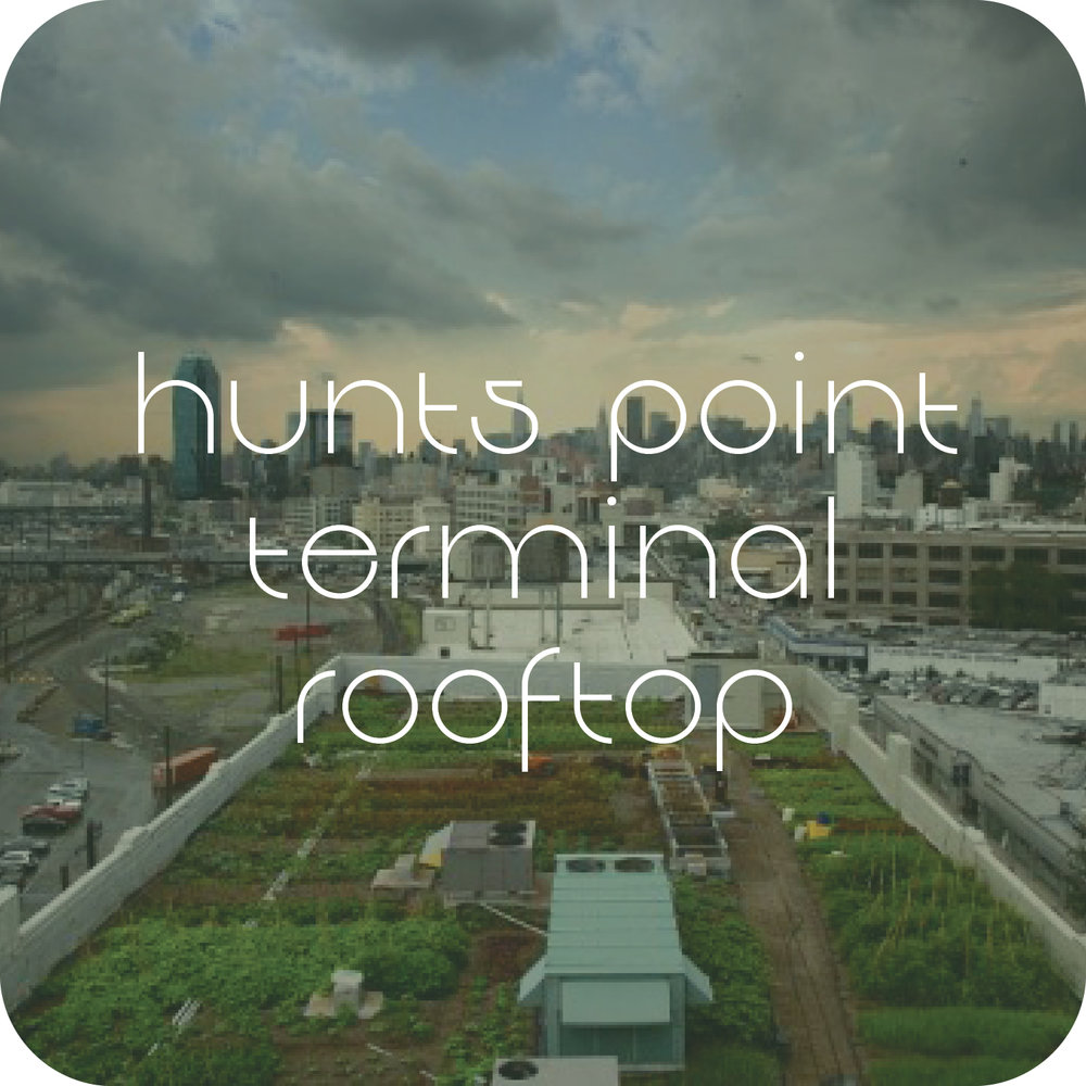 Hunts Point Terminal Market Rooftop