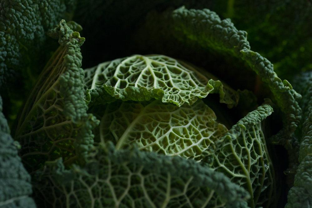 Savoy Cabbage Side Window 2-2.jpg