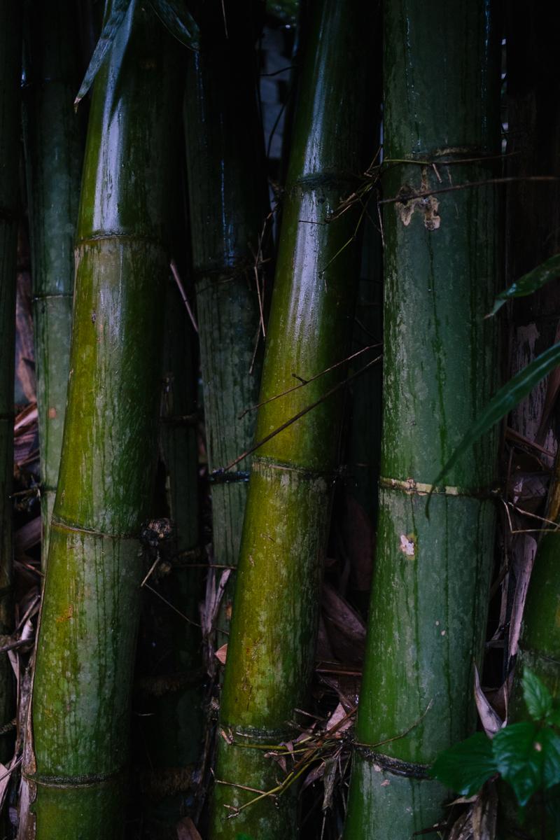 Hikaru Funnell - Capture Collect Photography - Fuji X Pro1 - Fujinon 23mm f-2.0 - Vietnam - October 2018 228.jpg