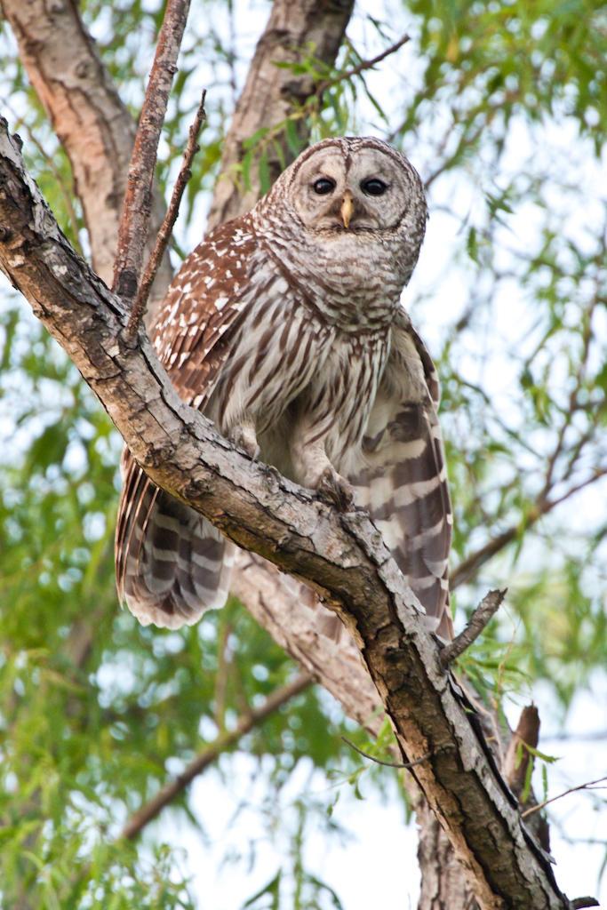 owl-o-ween.jpg
