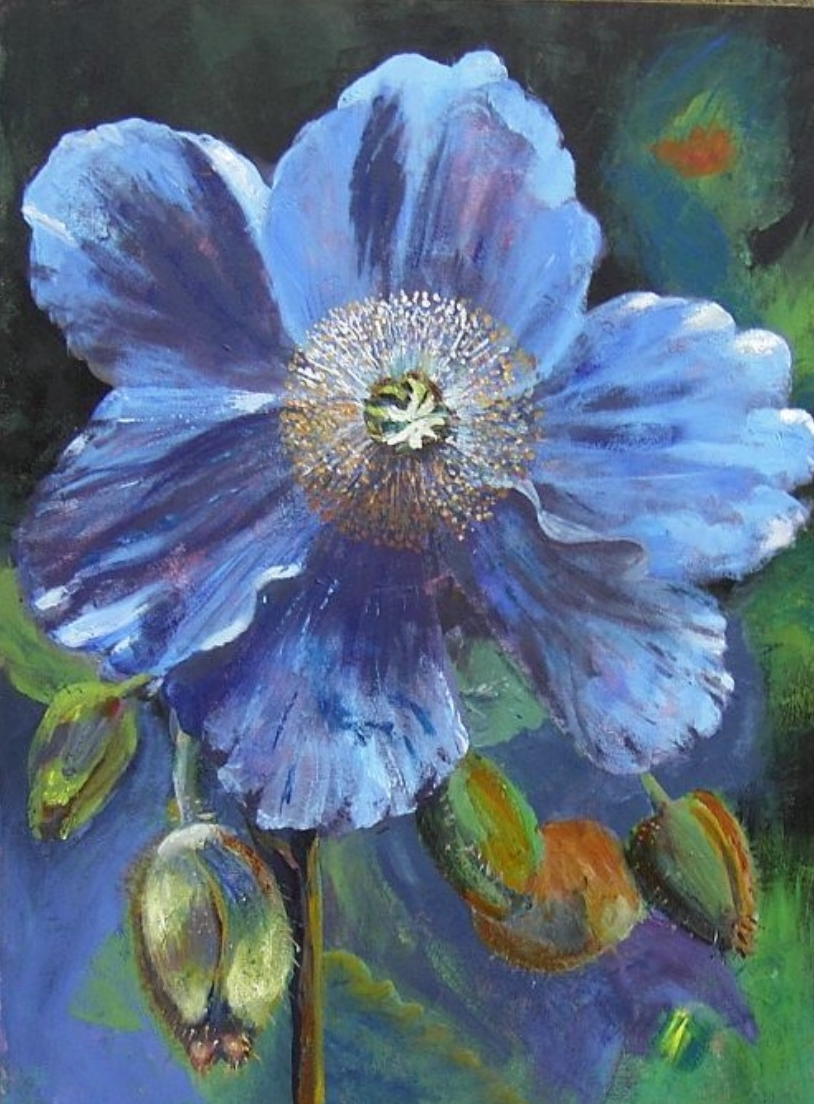 Tibetan Blue