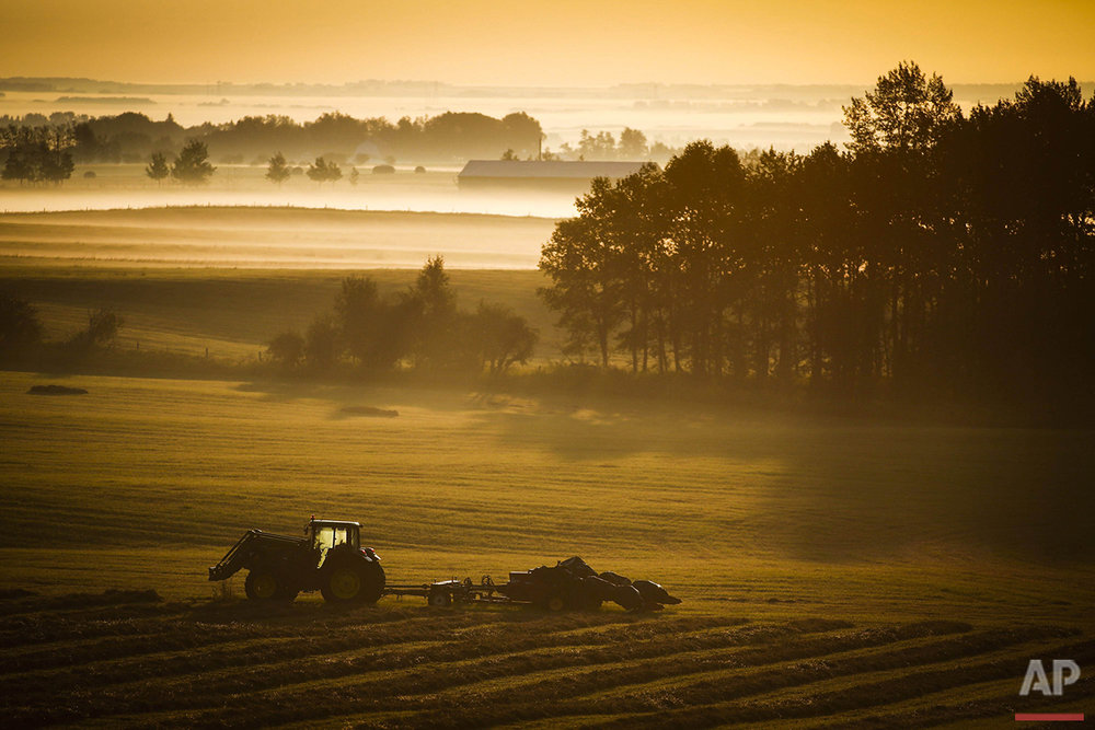 A farm tractor and baler sit in a hay field on a misty morning near Cremona, Alberta, Canada, on Tuesday, Aug. 30, 2016.  (Jeff McIntosh/The Canadian Press via AP)