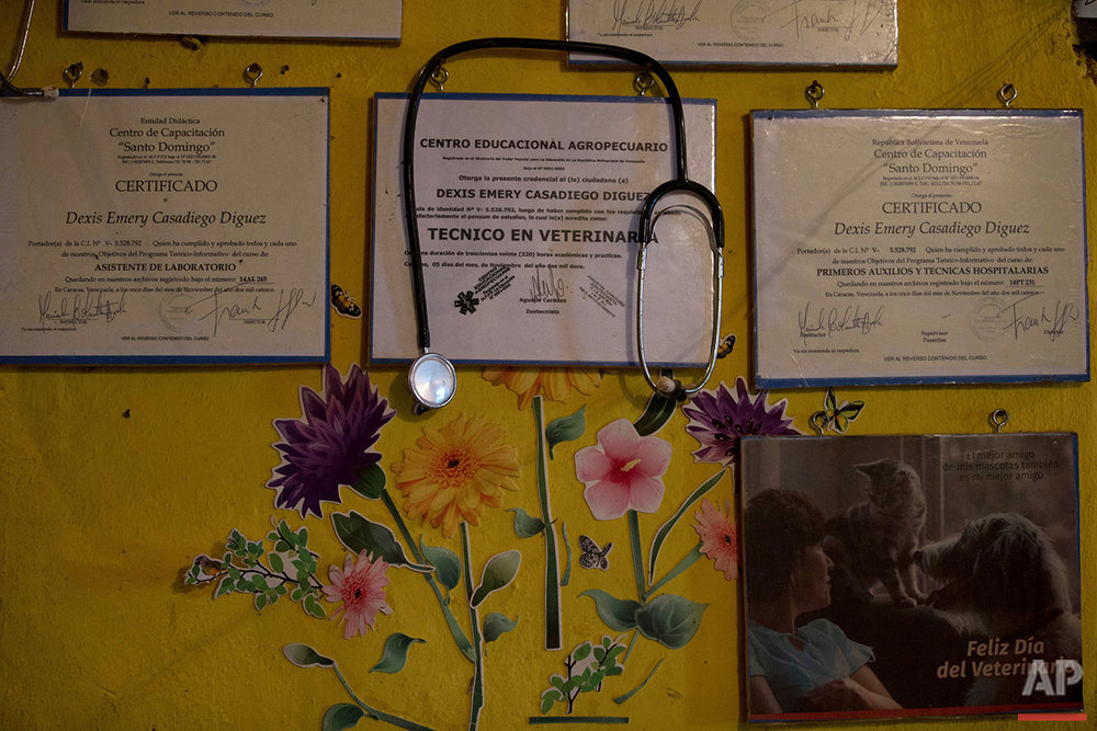 This July 21, 2016 photo shows a stethoscope and a wall decorated with the diplomas of veterinarian Dexis Casadiego, in her home which she has converted into the private animal shelter Funasissi, in the working-class Caracas neighborhood of El Junquito, Venezuela. The shelter is currently home to more than 200 cats and dogs. (AP Photo/Fernando Llano)See these photos on  APImages.com
