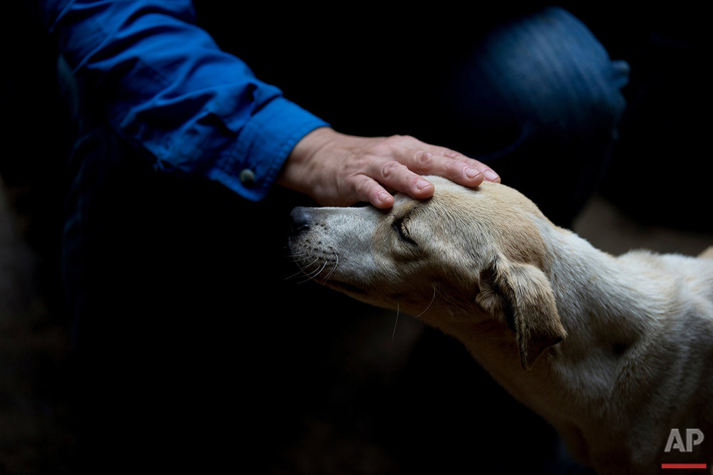 In this July 23, 2016 photo, Dexis Casadiego, a veterinarian and part owner of the Funasissi animal shelter, caresses an abandoned dog at the private shelter in the working-class Caracas neighborhood of El Junquito, Venezuela. No figures are available, but activists and veterinarians say they are seeing a growing number of dogs and cats abandoned at Venezuela's parks, shelters, and private clinics. (AP Photo/Fernando Llano)See these photos on  APImages.com
