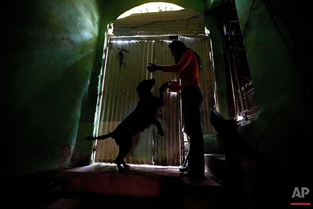 """In this July 21, 2016 photo, Katty Quintas, part owner of the Funasissi animal shelter, plays with her pet dog Sissis at the private shelter in the working-class Caracas neighborhood of El Junquito, Venezuela. A popular food substitute for dogs, that would never have been considered in better times, is chickenfeed. """"We have to give it to them because there's nothing else,"""" said Quintas. (AP Photo/Fernando Llano)See these photos on  APImages.com"""