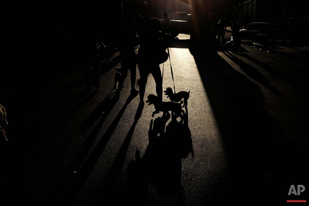 In this Aug. 21, 2016 photo, a woman and her pet dogs take part in a protest march to bring attention to the growing number of pet abandonments, and to demand a price reduction of pet food, in Caracas, Venezuela. Pet owners say the price of dog food has more than doubled in recent months to $2 a pound, more than a day's pay for those earning the minimum wage. (AP Photo/Fernando Llano) See these photos on  APImages.com