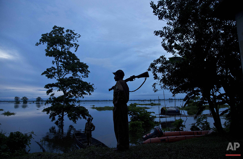 A forest guard keeps vigil at the flooded Kaziranga National Park, east of Gauhati, northeastern Assam state, India, Tuesday, July 26, 2016. Vast tracts of the park, home to the rare one-horned rhino, and another wildlife reserve were under water. Forest officials said they have found the remains of at least one rhino that had drowned in the flooding in the park. (AP Photo/Anupam Nath)