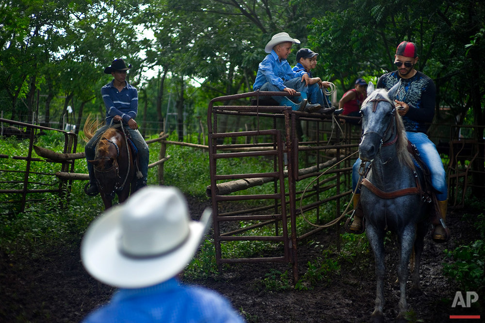 In this July 29, 2016 photo, children of the Future Ranchers organization sit on horses as they wait for the release of a calf during an improvised rodeo event at a farm in Sancti Spiritus, central Cuba. The children enrolled in the non-governmental organization have become the main attraction at many Sancti Spiritus rodeos, and a standard at religious processions and Cuba's May Day parades. (AP Photo/Ramon Espinosa)