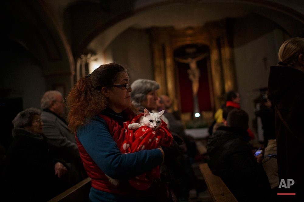 A woman holds her cat as worshipers attend a mass in the Saint Anton church in Madrid, Spain, Saturday, Jan. 17, 2015. It is the animal patron saints day in which thousands of people all over Spain bring their pets to churches to be blessed.(AP Photo/Daniel Ochoa de Olza)