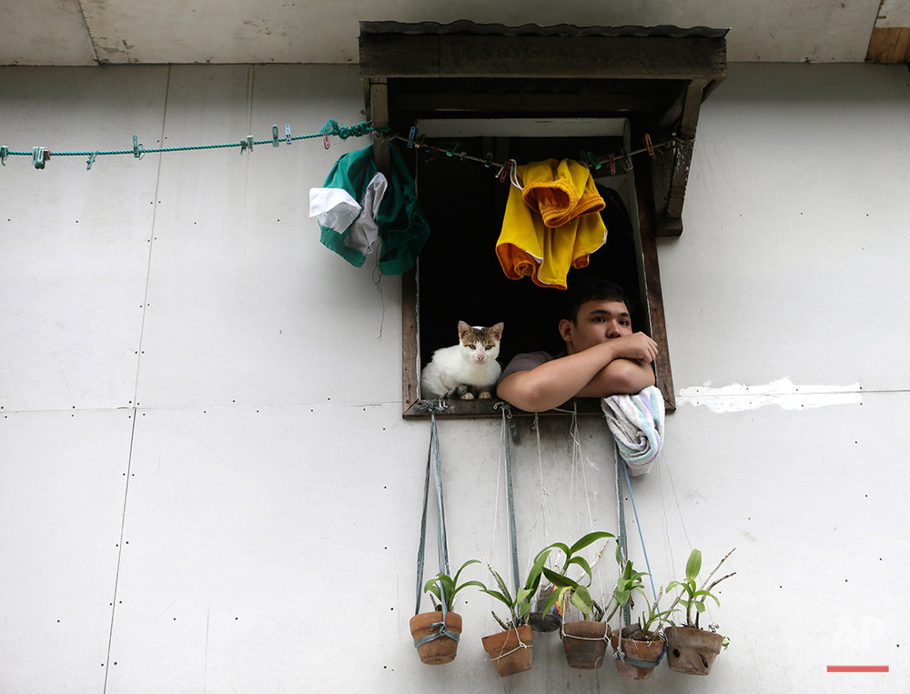 "A marooned resident peers from his upper floor window with his cat following flooding which was spawned by typhoon Sanba (local name ""Karen"") Saturday Sept.15, 2012 at San Juan city, East of Manila, Philippines. The rains flooded low-lying areas of metropolitan Manila forcing the cancellation of classes and the evacuation of hundreds of residents in affected areas. (AP Photo/Bullit Marquez)"