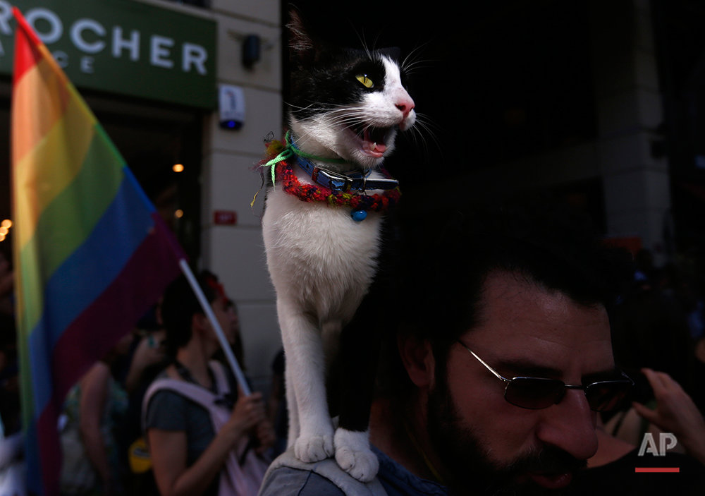 A cat sits on a shoulder of a man attending gay rights demonstration near Taksim Square in Istanbul, Turkey, Sunday, June 23, 2013. (AP Photo/Petr David Josek)