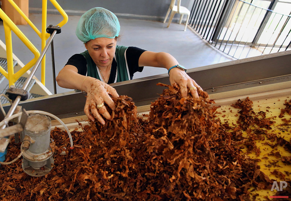 In this Monday, Aug. 8, 2016, Lebanese worker moves tobacco on the cigarette production line at Regie's factory in Hadath near Beirut. Syria's conflict has flooded Lebanon with hundreds of thousands of refugees, put a huge strain on the economy and increased demand on the country's already crumbling infrastructure. But the Syrian five-year civil war has been a boon for at least one sector: the tobacco industry. (AP Photo/Bilal Hussein)