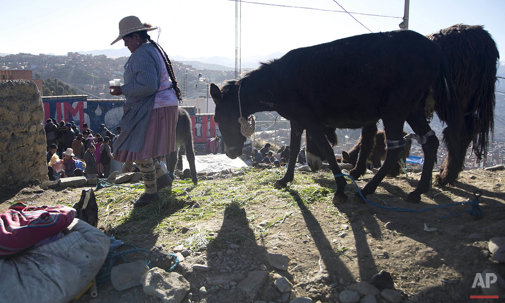 In this May 15, 2016 photo, Josefina Escobar carries a glass of her donkey's milk as she and her donkey walk around in search of buyers in El Alto, Bolivia. Aymara women like Escobar position their female donkeys every morning on a street corner in El Alto, a city neighboring the capital of La Paz. Then they milk them for clients lining up in the cold air. (AP Photo/Juan Karita)