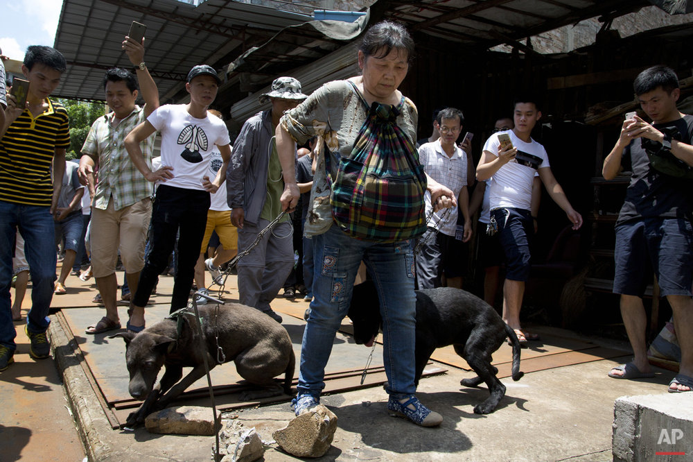 Dog Meat Festival