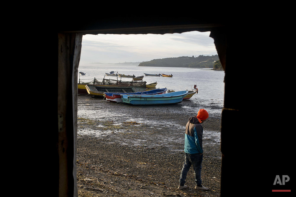 "In this May 11, 2016 photo, diver Jose Luis Cifuentes walks to his boat in the fishing village Quetalmahue, in Chiloe island, Chile, during the country's worst ever ""red tide"" environmental disaster. Even though Cifuentes has been on strike for three weeks, he regularly scoops out water from his boat to keep it from water rot. (AP Photo/Esteban Felix)"