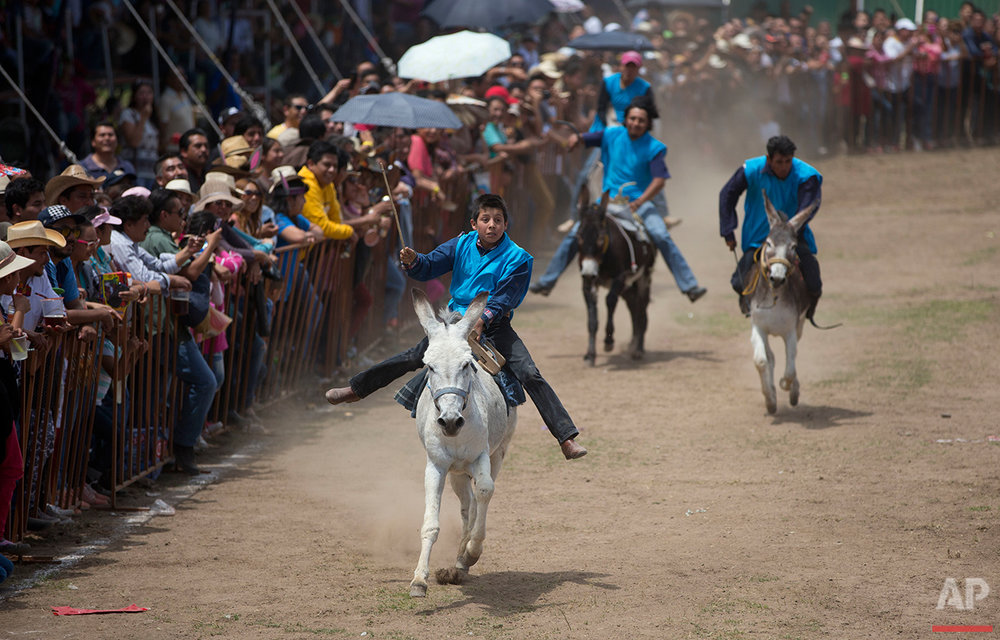 Mexico Donkey Fair Photo Gallery