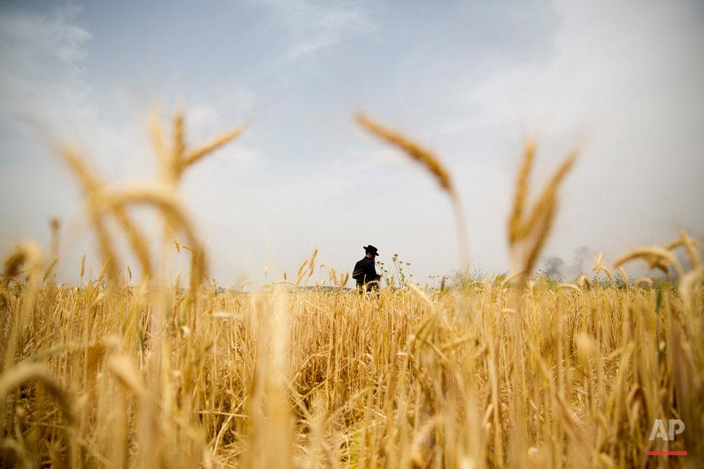 APTOPIX Mideast Israel Wheat