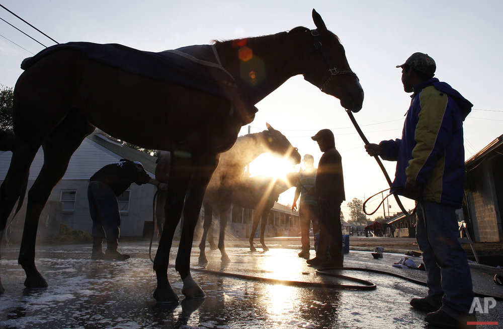 Grooms hold horses being washed after morning workouts at Churchill Downs, Wednesday, April 28, 2010, in Louisville, Ky. (AP Photo/Morry Gash)