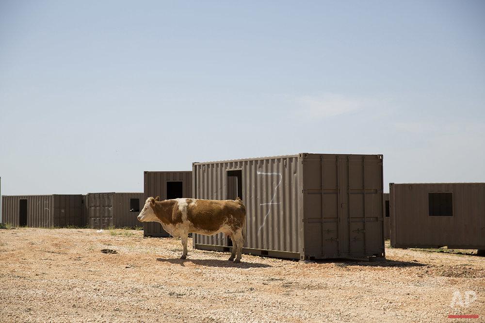 APTOPIX Mideast Israel Golan Cowboys