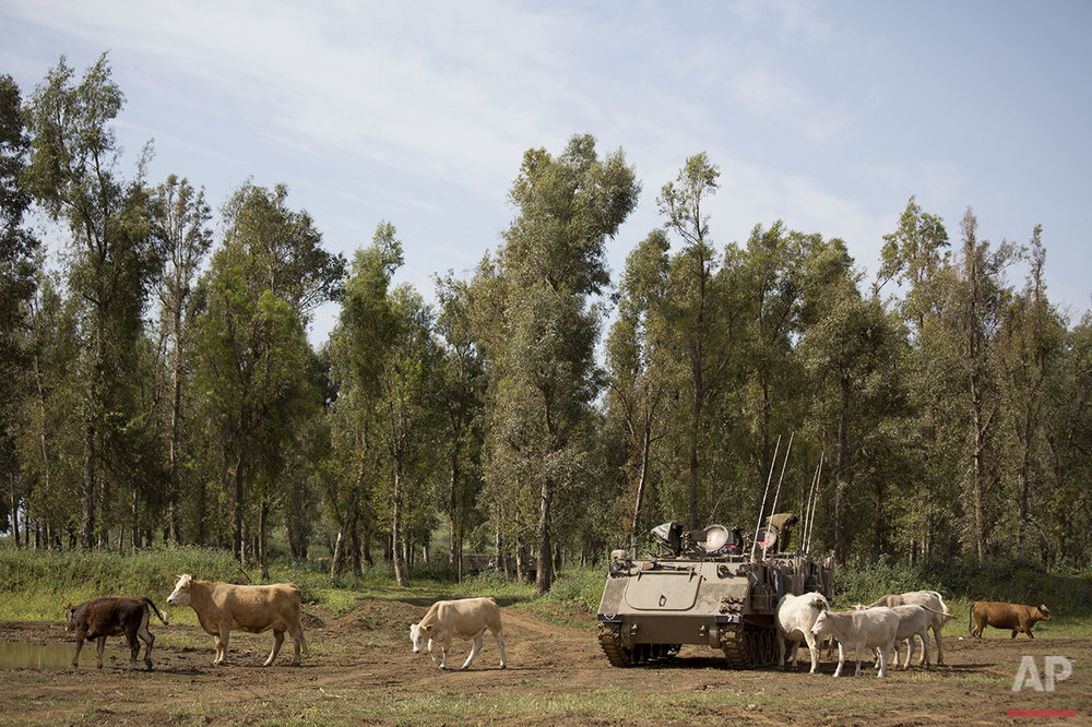 Mideast Israel Golan Cowboys