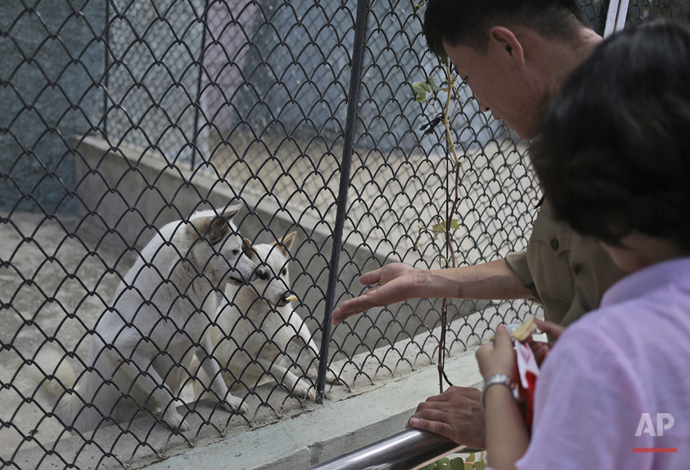 Visitors feed dogs at the newly opened Central Zoo in Pyongyang, North Korea, Tuesday, Aug. 23, 2016. One of the most popular attractions at the zoo might come as a surprise to foreign visitors. Just across the way from the hippopotamus pen and the reptile house, dozens of varieties of dogs _ including schnauzers, German shepherds, Shih Tzus and Saint Bernards _ are on display in the 'dog pavilion.' (AP Photo/Dita Alangkara)