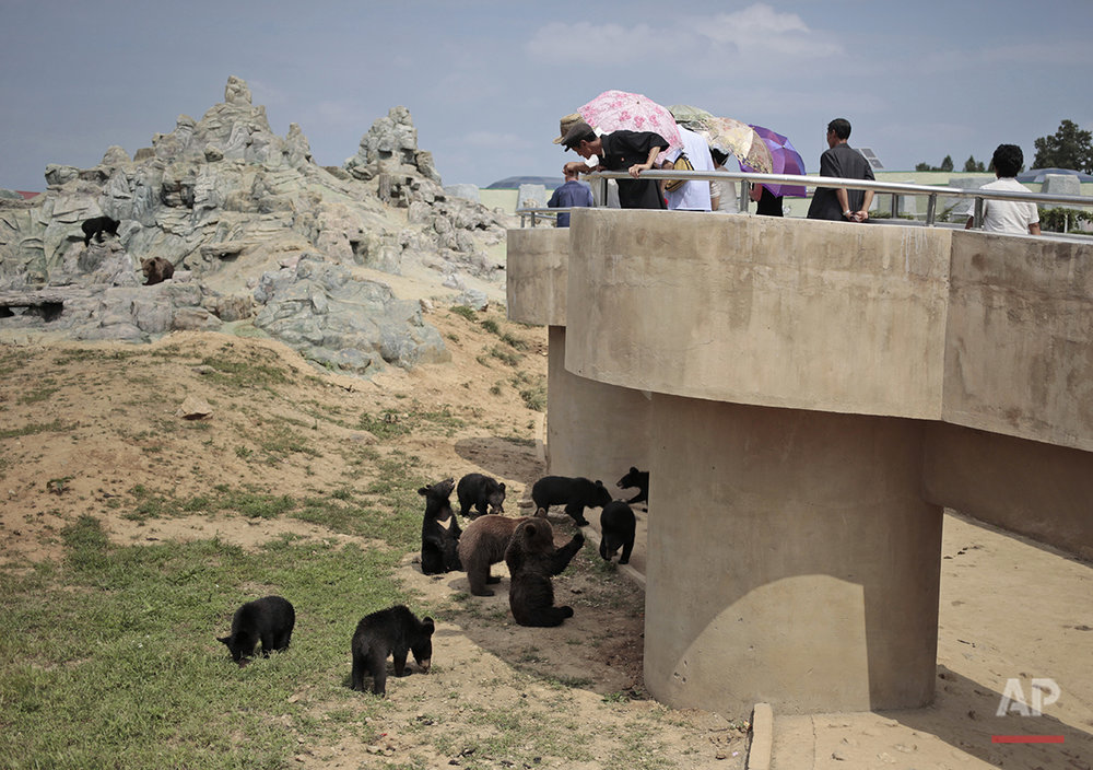 North Koreans look at bears at the newly opened Pyongyang Central Zoo in Pyongyang, North Korea, Tuesday, Aug. 23, 2016. North Korean leader Kim Jong Un's latest gift to the lucky residents of Pyongyang, the renovated central zoo, is pulling in thousands of visitors a day with a slew of attractions ranging from such typical zoo fare as elephants, giraffes, penguins and monkeys to a high-tech natural history museum. (AP Photo/Dita Alangkara)