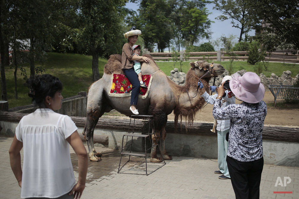A North Korean and her son pose for a photo on the back of a camel at the newly opened Central Zoo in Pyongyang, North Korea, Tuesday, Aug. 23, 2016. North Korean leader Kim Jong Un's latest gift to the lucky residents of Pyongyang, the renovated central zoo, is pulling in thousands of visitors a day with a slew of attractions ranging from such typical zoo fare as elephants, giraffes, penguins and monkeys to a high-tech natural history museum. (AP Photo/Dita Alangkara) See these photos on  APImages.com