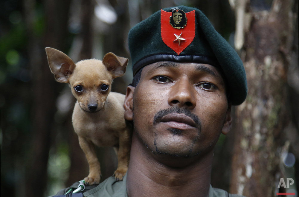 In this Aug. 11, 2016 photo, a rebel soldier of the 48th Front of the Revolutionary Armed Forces of Colombia, or FARC, poses for a photo with his dog in the southern jungles of Putumayo, Colombia. As the country's half-century conflict winds down, with the signing of a peace deal with the Government perhaps just days away, thousands of FARC rebels are emerging from their hideouts and preparing for a life without arms. (AP Photo/Fernando Vergara)