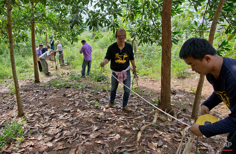 In this Thursday, Aug. 18, 2016 photo, researchers of the Thai Department of National Parks measure a boundary of a small farm to install a perimeter of bee hives to prevent wild elephants from intruding on properties in Pana, southeastern province of Chanthaburi, Thailand. Traditionally bee hives are usually placed on the ground, but here researchers raise them on stilts, at the elephants' eye-level in hopes of deterring them from encroaching on the property. (AP Photo/Gemunu Amarasinghe)