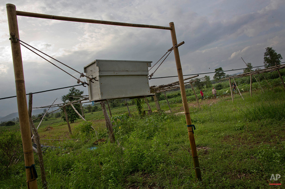In this Thursday, Aug. 18, 2016 photo, beehives are raised on a bamboo structure in part of a project to deter elephants from encroaching on private farmland in Pana, southeastern province of Chanthaburi, Thailand. To stop wild elephants rampaging through their crops, farmers are trying a pilot scheme run by the Thai Department of National Parks that is deploys bees as a new line of defense, exploiting elephants' documented fear of bee stings. (AP Photo/Gemunu Amarasinghe) See these photos on  APImages.com