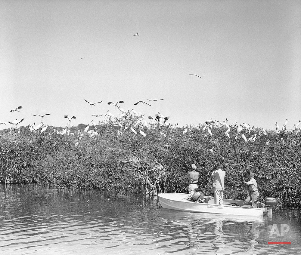 Florida Everglades 1953