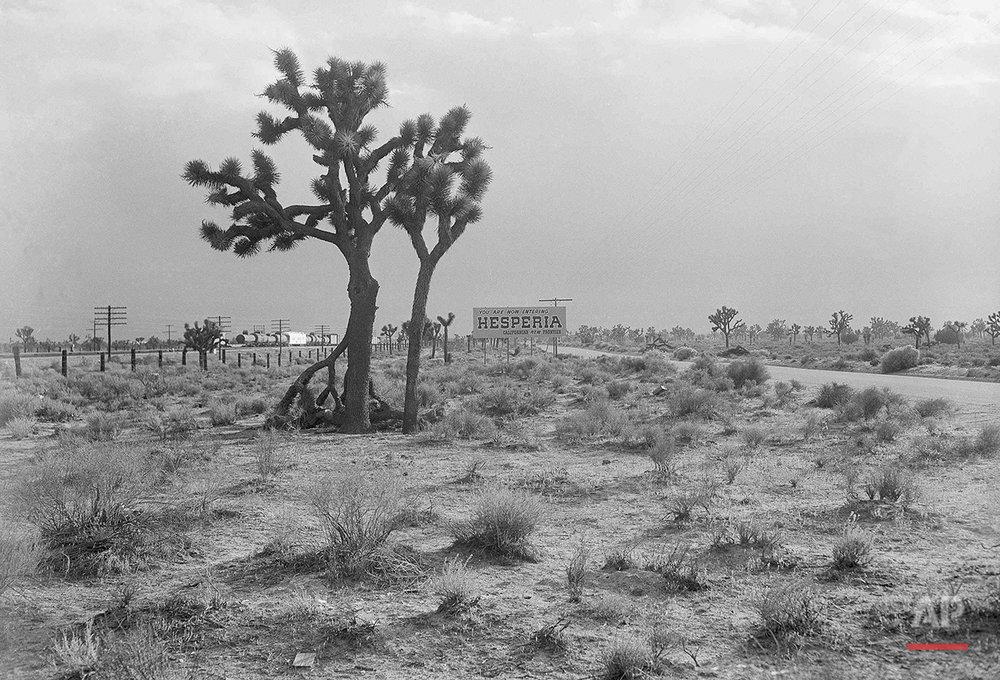 Mojave Desert 1955