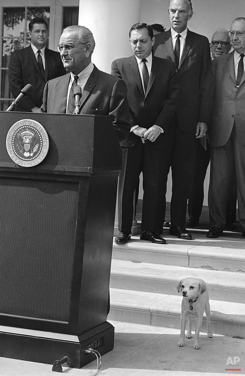 Lyndon Johnson, President of the United States, looks to his left while addressing gathered dignitaries at the signing of the Food Stamp Bill, Oct. 5, 1967 at the White House in Washington while, below, his newest pet, Yuki, does the same. Found as a pup by the President?s youngest daughter, the animal, whose name in Japanese means snow, has since then become the president?s favorite. (AP Photo/Bob Daugherty)