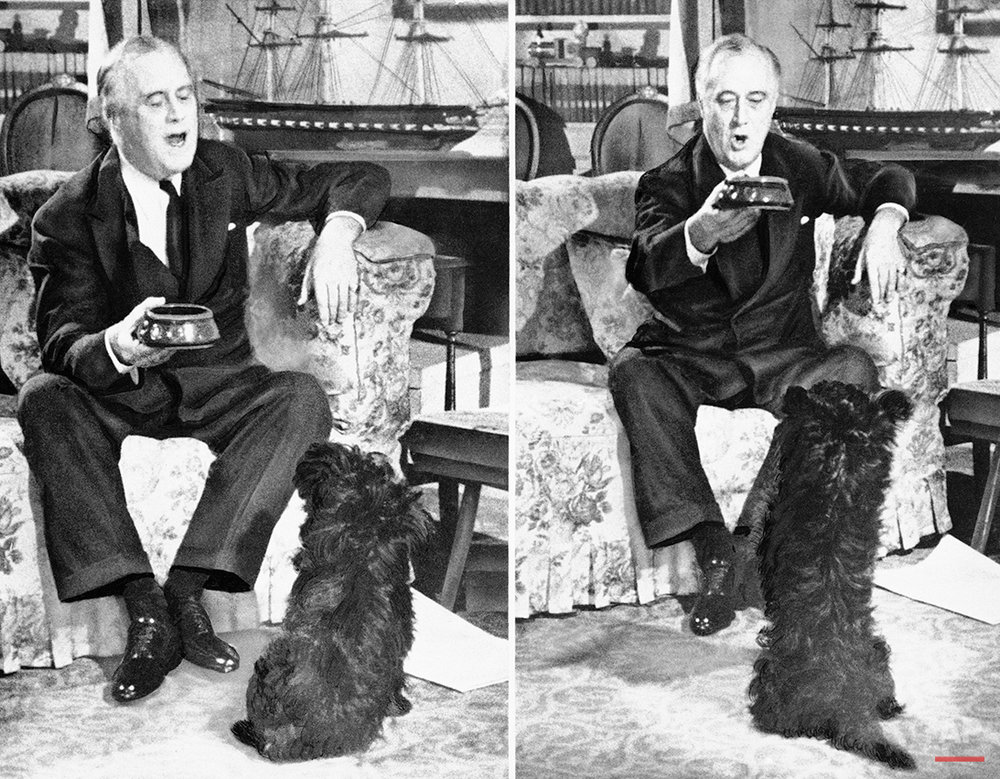 Pres. Franklin D. Roosevelt plays with is pet Scotch terrier Fala, at the White House, 1943, Washington, D.C. (AP Photo)