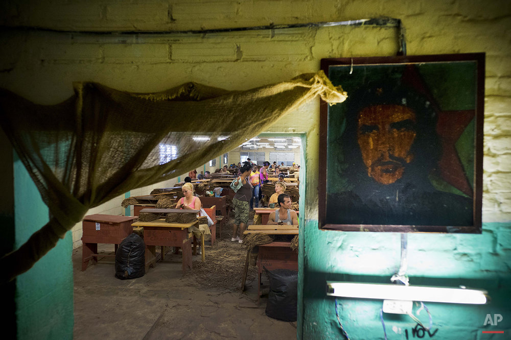 "In this March 1, 2016 photo, a picture of revolutionary hero Ernesto ""Che"" Guevara decorates a the wall inside a state-run warehouse where workers select tobacco leaves in the province of Pinar del Rio, Cuba. Tobacco operations receive tourists on group visits organized by state tourism agencies and foreigners by the hundreds receive lectures on Cuban tobacco. (AP Photo/Ramon Espinosa)"