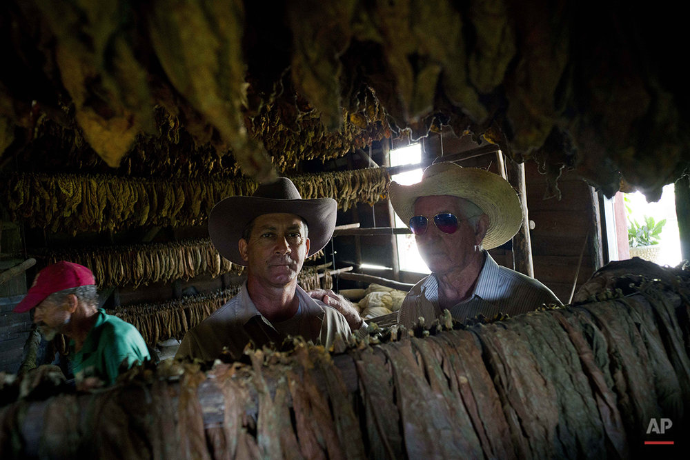 "In this Feb. 25, 2016 photo, Marcelo Montesino, 92, right, and his son Eulogio Montesino, 55, pose inside the building where they dry tobacco leaves on their Montesino tobacco farm in the province of Pinar del Rio, Cuba. Eulogio, who said his father has the ""health of steel"" thanks to eating farm-grown organic food his entire life, hopes to one day create a cigar brand named in his father's honor. (AP Photo/Ramon Espinosa)"