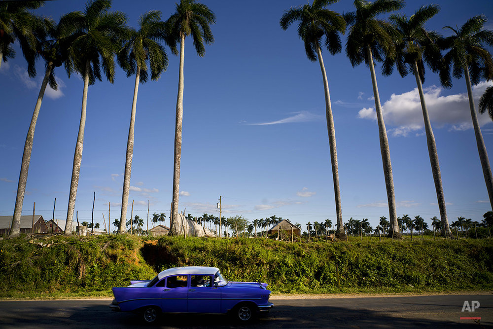 In this Feb. 26, 2016 photo, a classic American car passes the Francisco Blanco tobacco farm in the province of Pinar del Rio, Cuba. While foreign sales rose healthily last year, Cuban cigar industry officials say they have seen little impact on domestic sales from a boom in tourism that has brought hundreds of thousands of new visitors to Havana. (AP Photo/Ramon Espinosa)