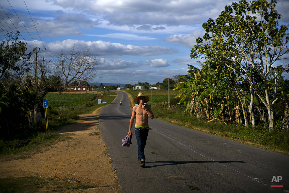 In this Feb. 26, 2016 photo, a tobacco farm worker walks home after his workday in the province of Pinar del Rio, Cuba. Workers say they're eager to see more benefits of Cuba's increasing links to the outside world since the start of new relations with U.S., without losing the placid lifestyle of the last half-century. (AP Photo/Ramon Espinosa)