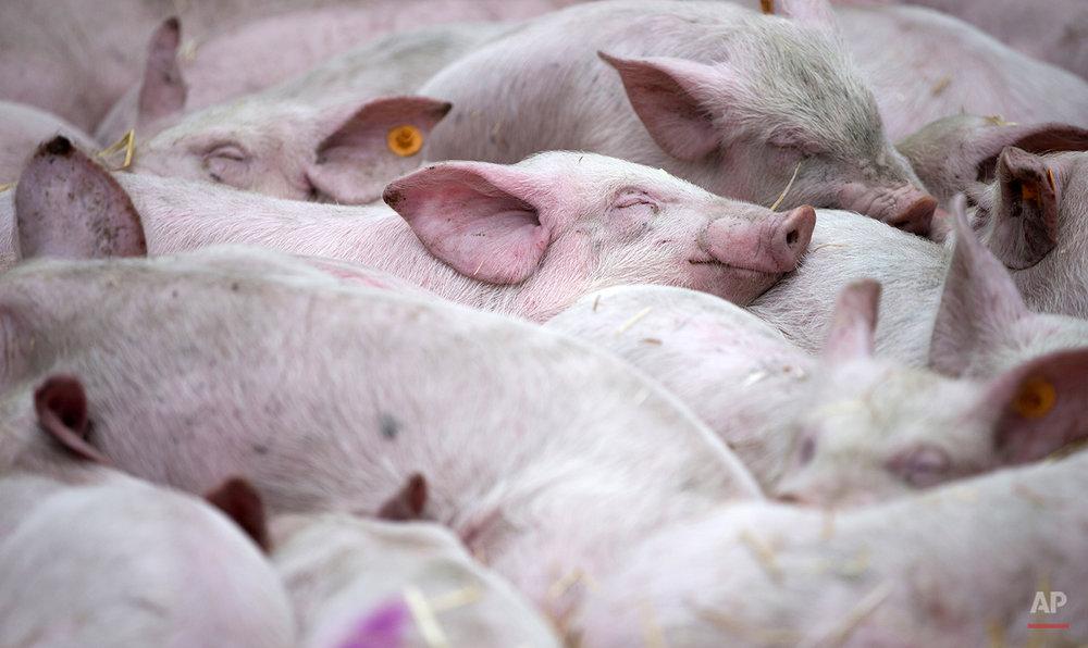 Belgium EU Farmers demonstration