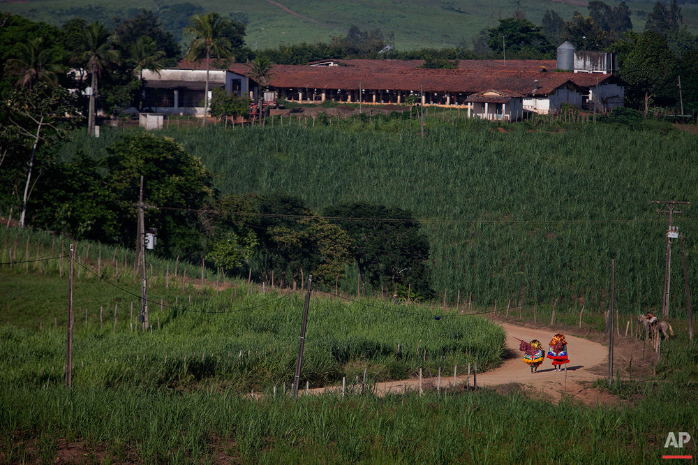 """In this Feb. 7, 2016 photo, costumed members of a """"Maracatu"""" group walk through sugar cane fields toward town for Carnival celebrations in Nazare da Mata, Brazil. Participants go from house to house asking for food and drink, a tradition that began long ago with people traveling between the region's sugar plantations. (AP Photo/Eraldo Peres)"""