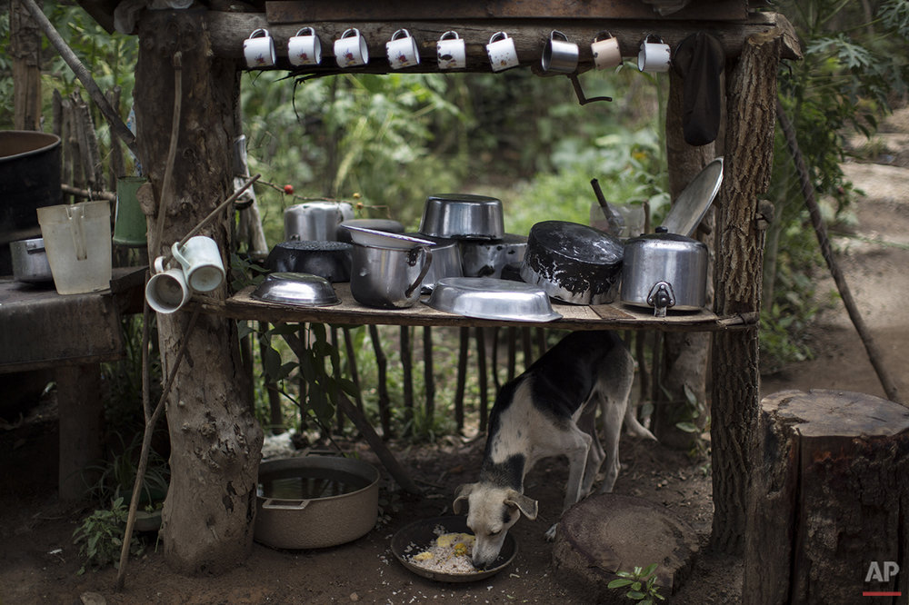 In this Nov. 19, 2015 photo, a dog eats under a table used to store dishes, mugs and pots in Areinha, Minas Gerais state, Brazil. The area known as Areinha is a no man's land where small groups of artisanal miners try their luck with artisan techniques, using wooden knives, metal pans, large water pumps and no infrastructure. (AP Photo/Felipe Dana)