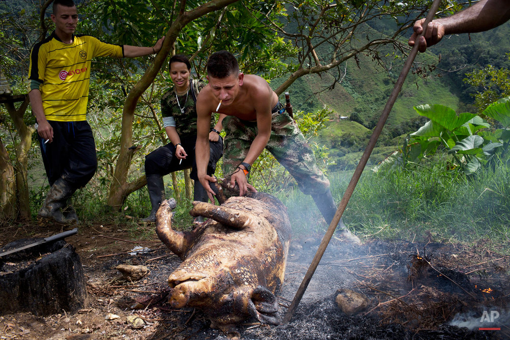 In this Jan. 4, 2016 photo, Harrison, a rebel soldier of the 36th Front of the Revolutionary Armed Forces of Colombia, or FARC, drags the carcass of a hog to an open fire, for singeing to remove body hair, in their hidden camp in Antioquia state, in the northwest Andes of Colombia. The animal will be enough to feed the 26 members of the group for several days. (AP Photo/Rodrigo Abd)