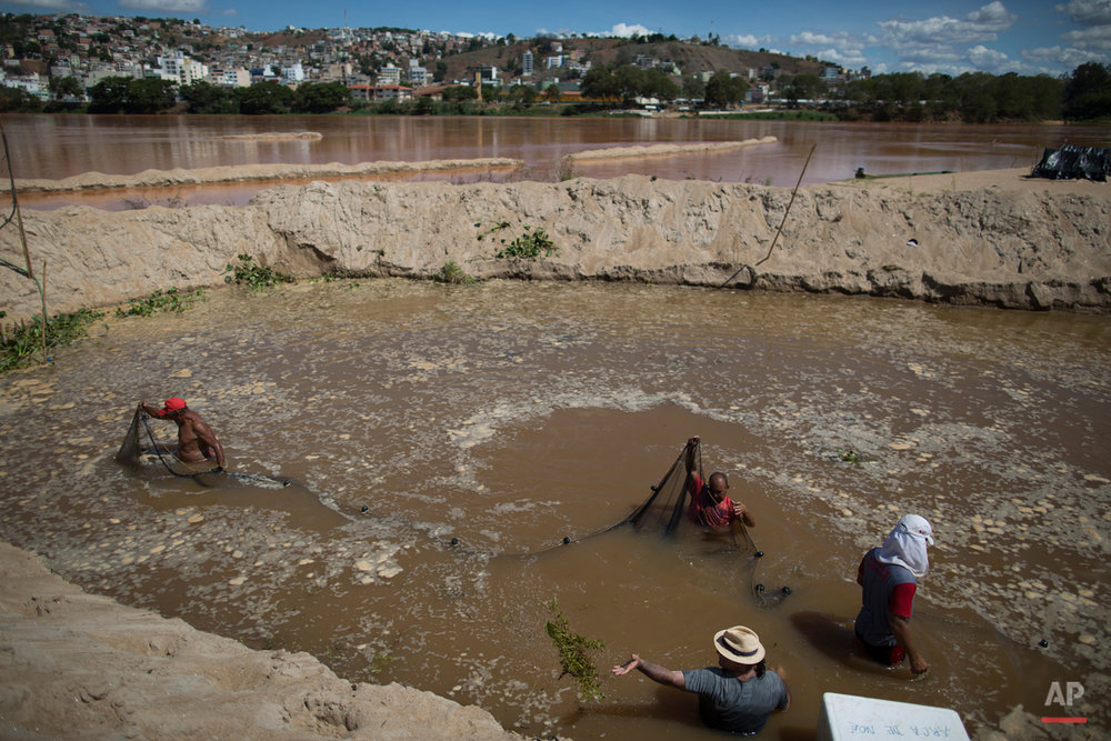 In this Nov. 21, 2015 photo, fishermen use a net in a temporary pool they built to protect some of the creatures that inhabit the Doce River from polluted waters, in Colatina, Brazil. The plume of mud released by the Samarco mine dam disaster, devastated wildlife, despite efforts by local fisherman and others to move fish out of the contaminated waters. (AP Photo/Leo Correa)
