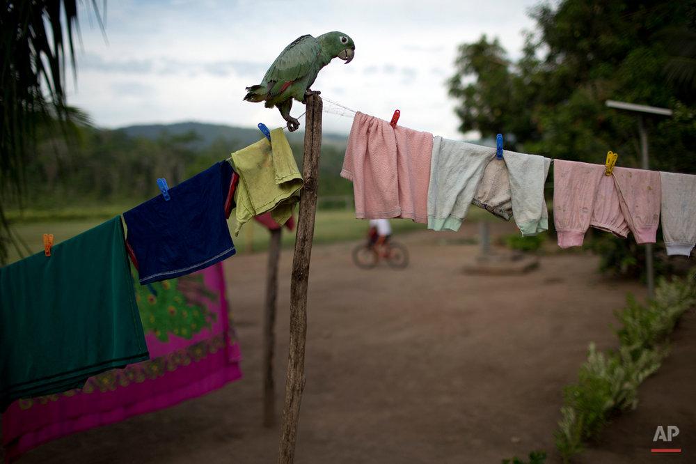 APTOPIX Peru Ashaninka Hunger Photo Gallery