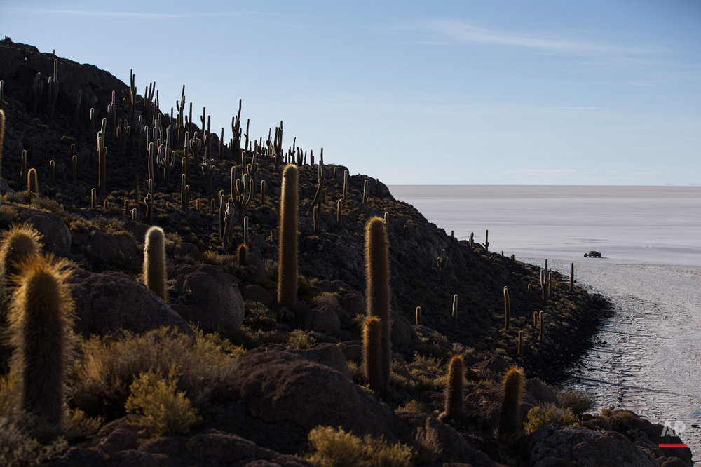 In this Jan. 11, 2015, photo, a competitor races past Cactus Island along the Uyuni salt flats during the eighth stage of the Dakar Rally 2015 between Uyuni, Bolivia, and Iquique, Chile. The race will finish on Jan. 17, passing through Bolivia and Chile before returning to Argentina where it started. (AP Photo/Felipe Dana)