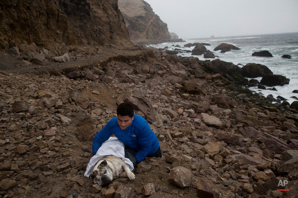 In this Oct. 15, 2015, photo, Jonatan Jimenez carries his dead dog Roco, for the sea to take his body away in La Herradura beach in Chorrillos, Lima Peru. According to Jimenez he used to always walk on the beach with Roco, so he wanted it to be his final resting place. (AP Photo/Rodrigo Abd)