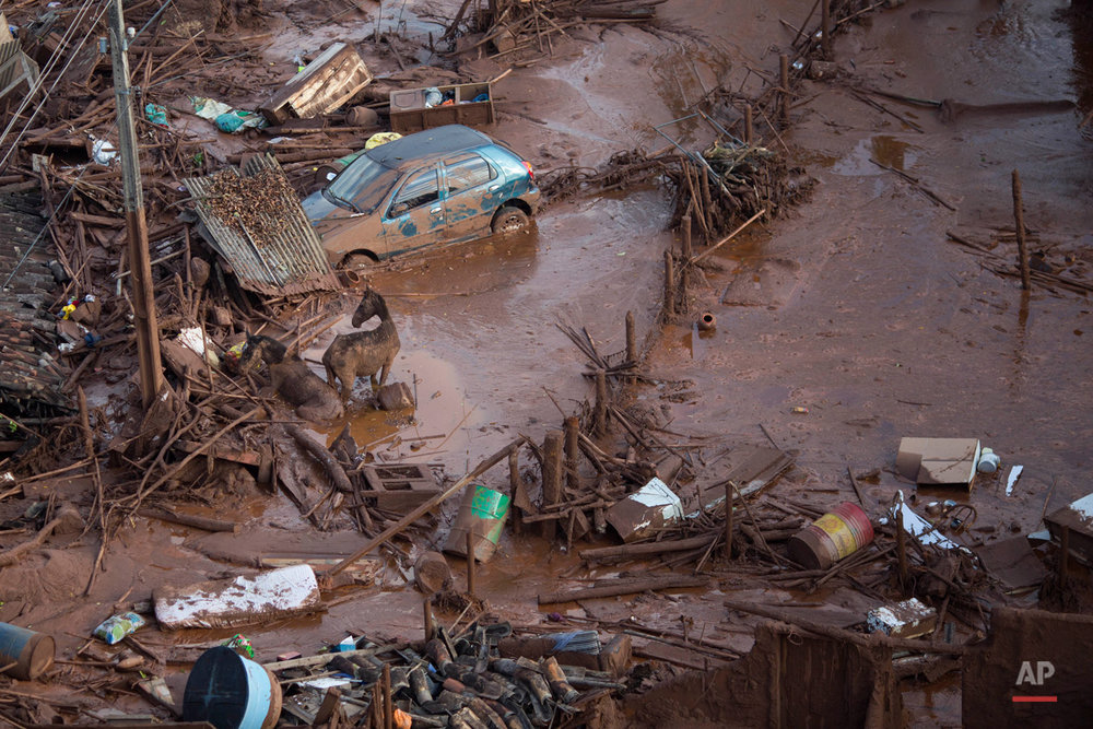 In this Nov. 6, 2015, photo, horses struggles in the mud at the small town of Bento Rodrigues after a dam burst in Minas Gerais state, Brazil. Brazilian rescuers searched feverishly Friday for possible survivors after two dams burst at an iron ore mine in a southeastern mountainous area. (AP Photo/Felipe Dana)
