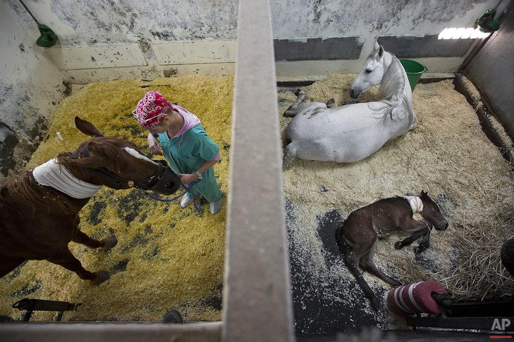 Mideast Israel Healing Horses Photo Essay