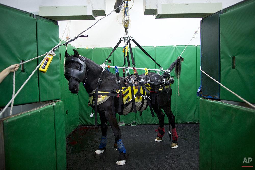 APTOPIX Mideast Israel Healing Horses Photo Essay
