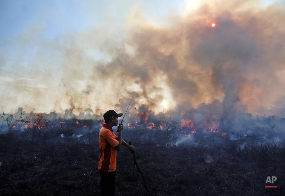 In this July 30, 2015, photo, a fireman talks on his walkie talkie as he and his team battle peatland fire on a field in Pemulutan, South Sumatra, Indonesia. Government negligence, rampant development and illegal land clearing, often combined, spark wildfires in Indonesia that annually ravage thousands of acres of forest and could cover parts of neighboring Malaysia and Singapore in a thick noxious haze. (AP Photo)
